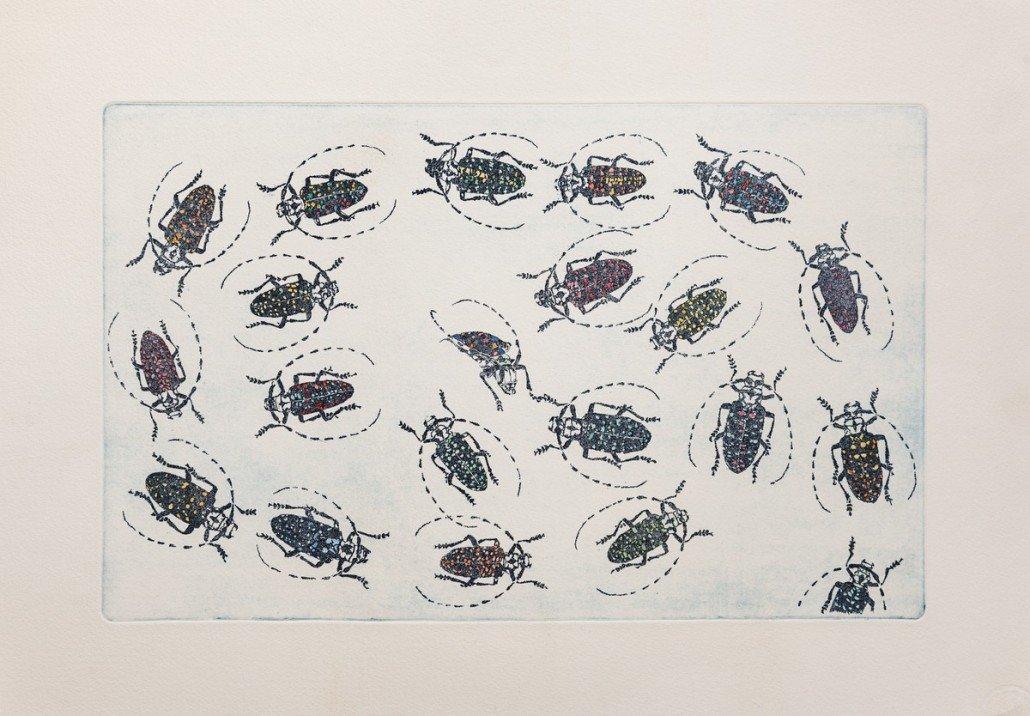 No entomophobia – Calloplophora Sollii