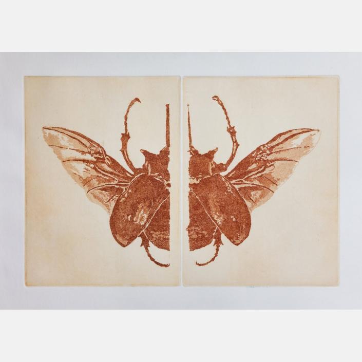 No entomophobia – Megasoma Elephas