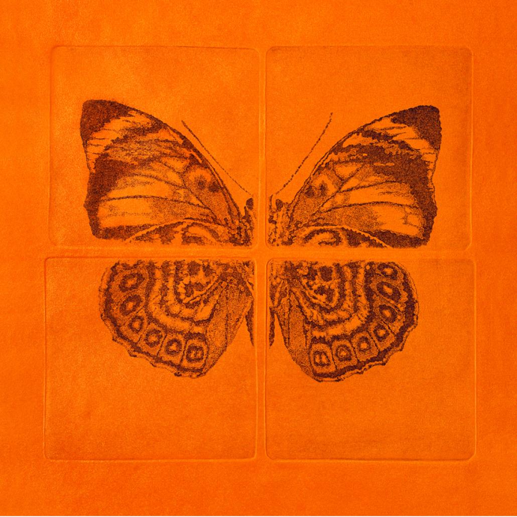 The art of collecting butterflies