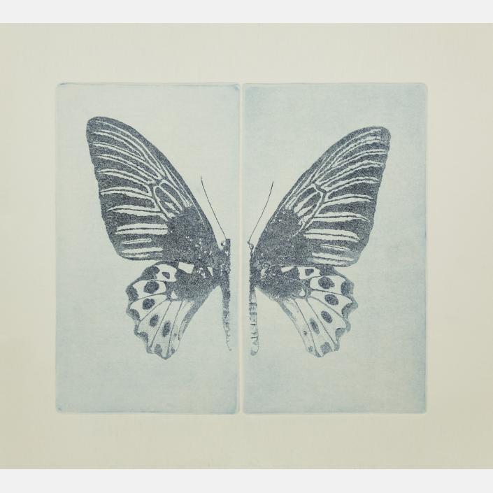 No entomophobia – Troides Hypolitus