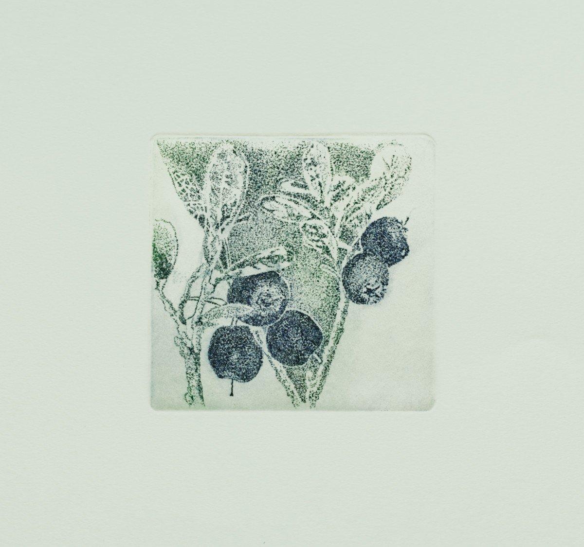 Berrying: Blåbær-