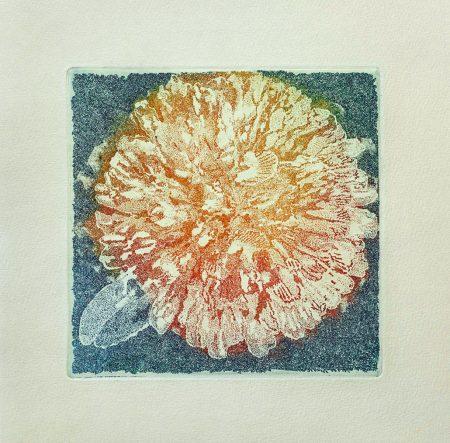 Herbarium-All-grass-colours–Rødkløver