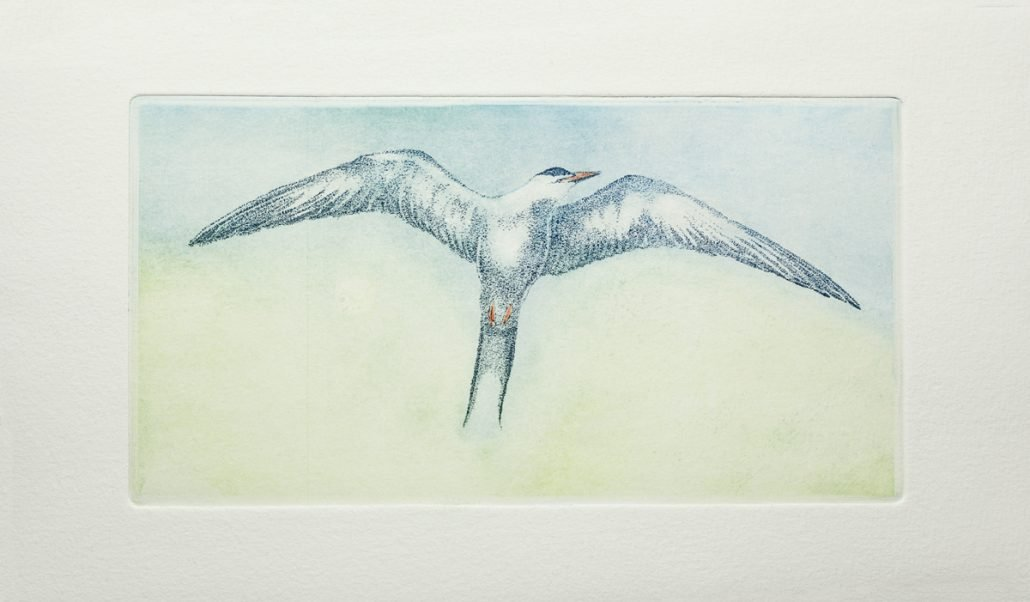 angrybird-3